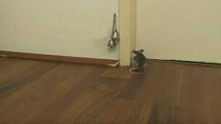 Come fa un topo a rientrare a casa? Non crederai ai tuoi occhi