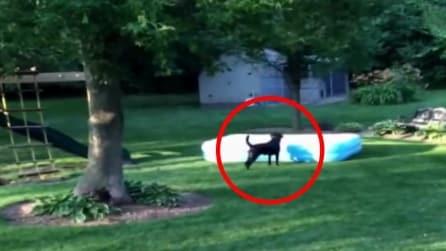 I bimbi si nascondono dietro la piscina: quello che fa il cane vi farà morire dal ridere