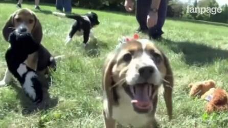 Ecco la prima cucciolata di cani nati da fecondazione in vitro