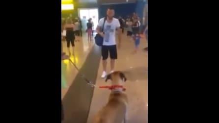 Sono passati 3 anni: quando il cane rivede il suo padrone ecco la sua commovente reazione