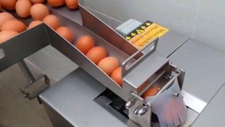 Le uova passano in questo strano macchinario: l'invenzione geniale