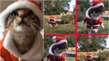 Traveste i suoi gatti da Babbo Natale, la loro reazione è dolcissima