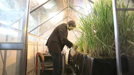 Plant power: ecco come produrre energia elettrica con le piante