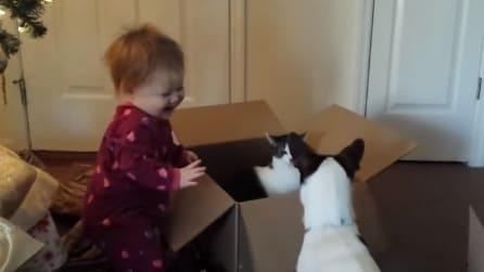 La scena a cui assiste la piccola la diverte tanto: guardate cosa fanno cane e gatto