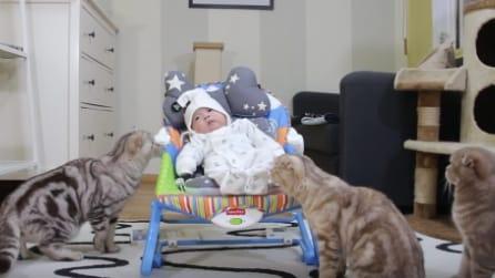 I gatti incontrano per la prima volta il piccolo appena nato: la loro reazione è tenerissima