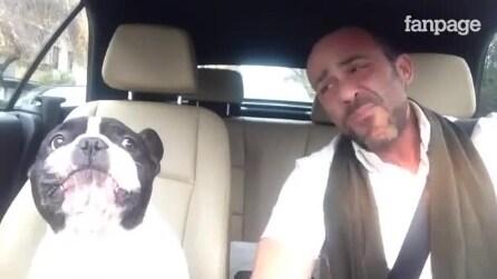 O dono começa a cantar... A reação do cachorro é de morrer de rir