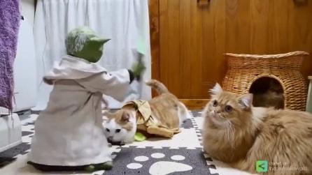 Star Wars, Yoda si muove e i gatti Jedi lo seguono