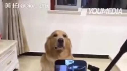 Posa para foto: o que o cachorro faz é de morrer de rir