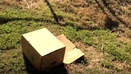Trova una scatola sul ciglio della strada: ecco cosa c'è all'interno