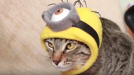 Come realizzare un cappello a forma di Minion per il gatto