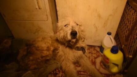 Lo trovano abbandonato in uno stanzino: la commovente storia di Duffy