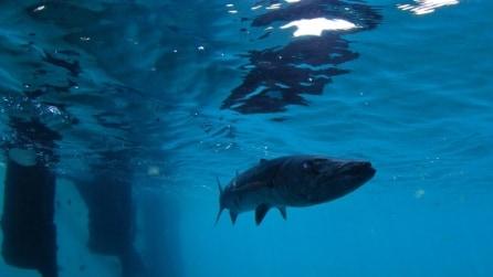 Abbandonato e circondato da squali: benvenuti al b&b Frying Pan Tower