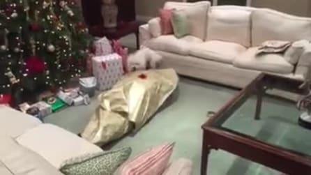 Ragazzo si fa impacchettare come fosse un regalo: la sorpresa stupenda a Natale