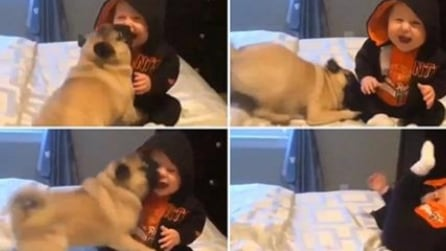 La sua padroncina rischia di cadere dal letto: la scena tenerissima con il cagnolino