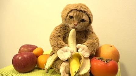 Veste il suo gatto con uno strano costume e il video diventa virale