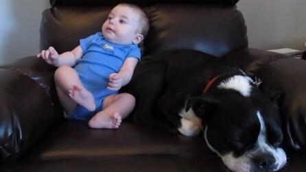Il bimbo e il cane se ne stanno comodamente sul divano: quello che accade dopo vi farà ridere