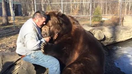 L'orso gigante che ama le coccole: le immagini vi emozioneranno