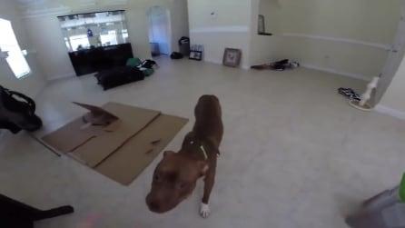 La sua padrona inizia a cantare, la reazione di questo cane è esilarante