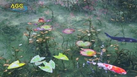 Giappone, ecco lo stagno che sembra un quadro di Monet