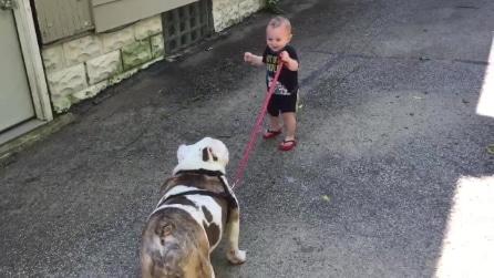 Il bambino porta a passeggio il bulldog, ma ecco che succede