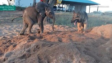 La fantastica amicizia tra un cane e un cucciolo di elefante