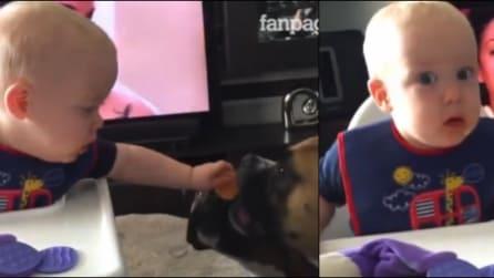 Il bimbo è altruista ma il cane ne approfitta: ecco la sua tenerissima reazione