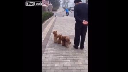 """""""Attenti!"""" ed ecco cosa fanno i cagnolini"""