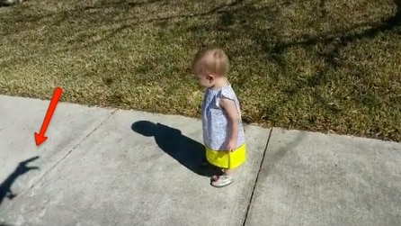 Il padre fa gli animali con le ombre: ecco come reagisce la piccola