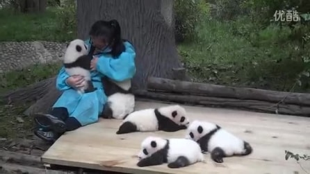 Il lavoro più bello del mondo: abbracciare panda
