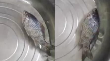 Mette i pesci in acqua dopo averli congelati e tornano a vivere