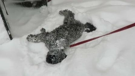 Il cane che impazzisce per la neve, la sua reazione è magnifica