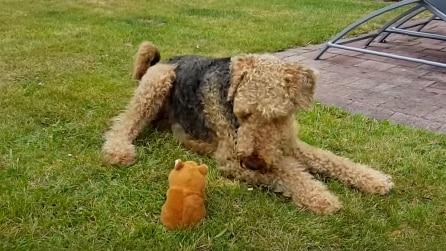 """La tenera """"conversazione"""" tra il cane e il pupazzo"""