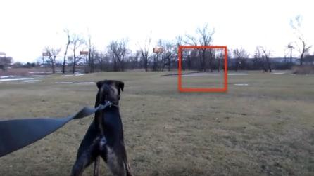Va al parco con i cani ma in lontananza vede qualcosa di inaspettato