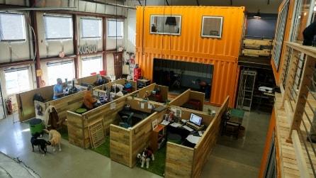I nuovi uffici Kurgo: un paradiso per gli amanti degli animali