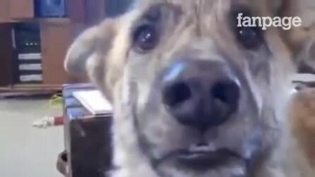 O 'cachorro falante': diálogo hilário de morrer de rir
