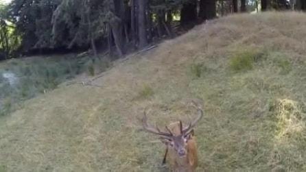 Il drone si avvicina al cervo: la reazione dell'animale è del tutto inaspettata
