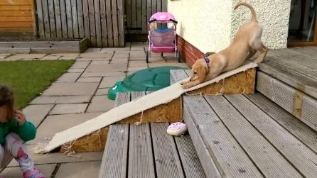 """Il cucciolo di labrador si """"lancia"""" dallo scivolo"""