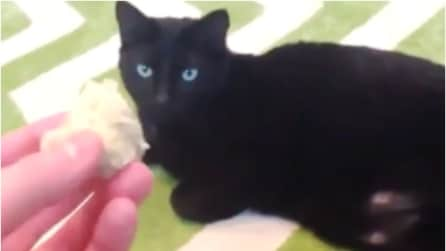 Il gatto che si comporta come un cane: la padrona gli lancia un oggetto e lui lo riporta