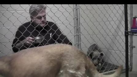 Il cucciolo non vuole mangiare da solo e il veterinario si siede nella gabbia accanto a lui