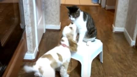 La tenera amicizia tra un cocker e un gatto