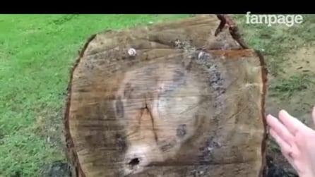 Homem corta o galho de uma árvore e coloca um saco preto: o motivo é genial