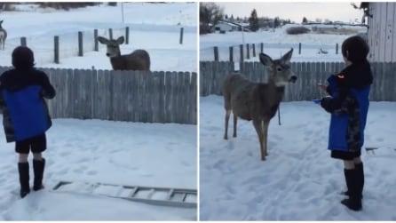Il cervo arriva ogni giorno alla stessa ora fuori casa ed ecco cosa fa