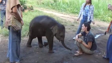 Il dolce gesto del piccolo elefante: si avvicina alla donna ed ecco cosa fa