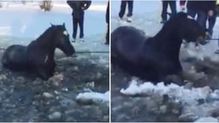 Il cavallo cade nel lago ghiacciato e resta intrappolato: ecco come viene salvato