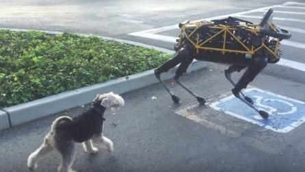 Robot vs cane: ecco la reazione del cagnolino quando lo vede