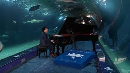 """Suona """"circondato"""" dagli squali: la performance del pianista in un'atmosfera da brividi"""