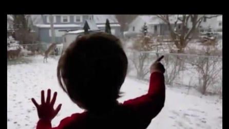 """""""Ne voglio uno"""", l'eccitazione del bambino alla vista dei cerbiatti sulla neve"""