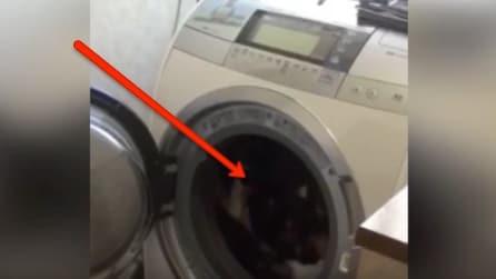 Vede qualcosa di strano nella lavatrice: ecco di cosa si tratta