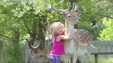 La bimba si avvicina al cerbiatto e quello che accade è tenerissimo