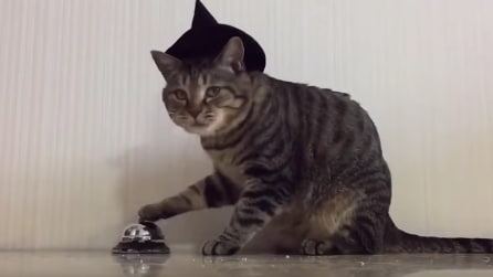 Gatto autoritario: ogni volta che suona il campanello il suo padrone ubbidisce